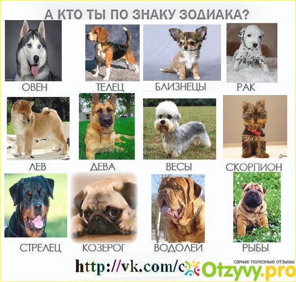 Пройти тест на кто ты из животных с картинками