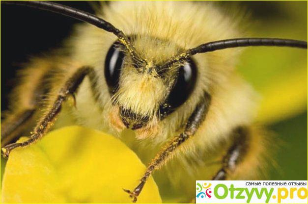 Пчелиный подмор как продукт пчеловодства.