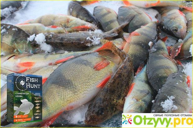 Где купить приманку для рыбы FISH HUNT