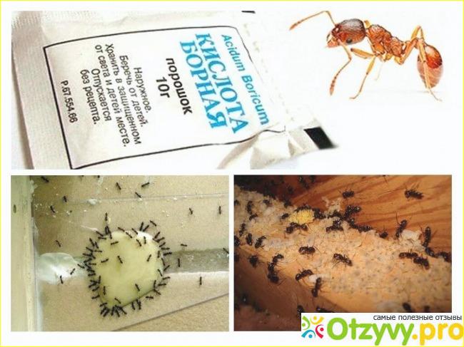 3. Эффективность борьбы с муравьями.