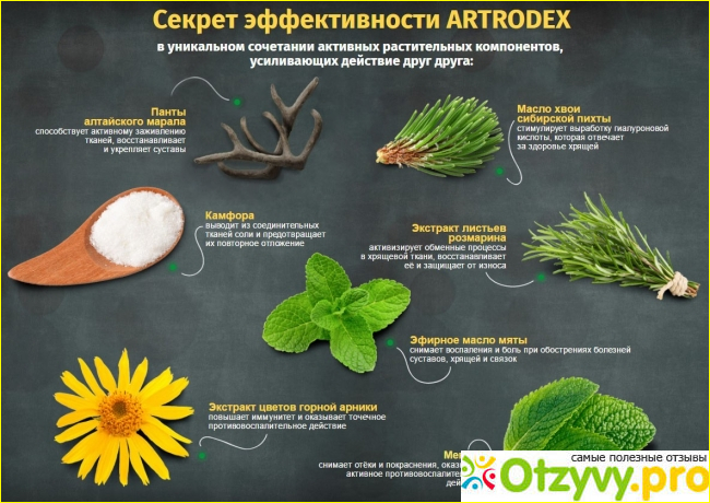 Вся основная информация о препарате Артродекс для суставов и мышц