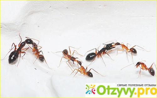 приманка для муравьев рыжих