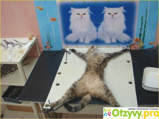 попал уютный хотят ли стерилизованные кошки кота ЮСУПОВ РАСУЛ КОСИМОВИЧ