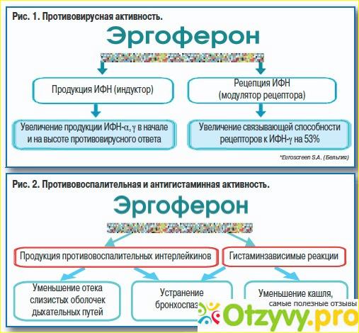 Особенности лечения эргофероном: показания, инструкция по.