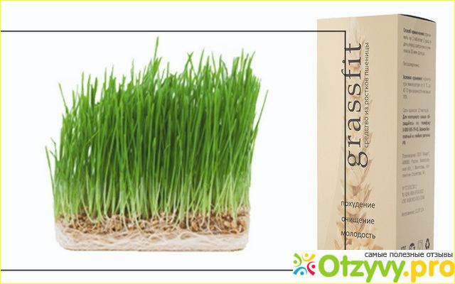 GrassFit для похудения в Армавире