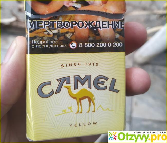 Сигареты camel казахстан купить сигарета изи купить